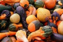 Mucchio delle zucche colorate differenti e verdure — Foto stock
