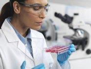 Scientifique examinant la culture cellulaire dans un récipient à puits multiples — Photo de stock