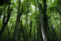 Low angle view of green forest trees — Stock Photo