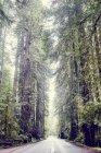 Road through redwood trees — Stock Photo