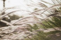 Close up of wild grass, beautiful floral background — Stock Photo