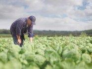 Agriculteur travaillant dans le champ de culture — Photo de stock