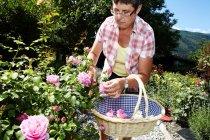 Женщина собирает цветы в саду — стоковое фото