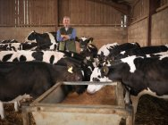 Portrait of farmer and calves feeding from trough in farm shed — Stock Photo
