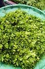 Буш сладкий лист на рынке — стоковое фото