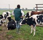 Vista traseira do agricultor com pastejo de vacas na paisagem rural — Fotografia de Stock