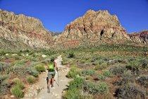 Задній вид мандрівного, гуляючи по стежці, перший крик, Лас-Вегасі, штат Невада, США — стокове фото