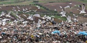Птахи кружляти центр збору сміття — стокове фото
