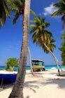 Vue panoramique sur les palmiers sur la plage tropicale — Photo de stock