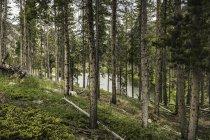 Переглянути через ліс, червоний Lodge — стокове фото