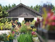 Travailleurs de la femelle Garden Center avec des plantes — Photo de stock
