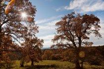 Sol brillando a través de los árboles - foto de stock