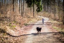 Boy and dog on dirt path in forest — Stock Photo