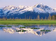 Chugach mountains reflecting in pond — Stock Photo