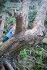 Ragazzo che si arrampica albero nudo nella foresta — Foto stock