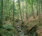 Bach fließt tagsüber durch einen Wald — Stockfoto