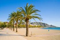 Дерево пальмы на пляже — стоковое фото