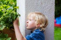 Мальчик осматривает растения на открытом воздухе — стоковое фото