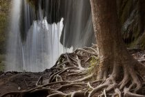 Tree with exposed roots — Stock Photo