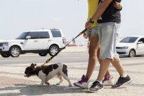 Colpo ritagliato di giovane coppia che passeggia con il cane, Copacabana, Rio De Janeiro, Brasile — Foto stock