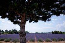 Tree growing by field — Stock Photo
