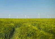 Champ vert et éoliennes sous clairement ciel bleu — Photo de stock
