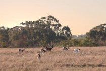 Vista do Safari vida selvagem — Fotografia de Stock