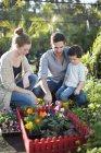 Coppia e figlio con giardino in miniatura su terreno — Foto stock