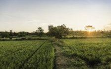 Paysage de champ vert au coucher du soleil, diminuant la vue — Photo de stock