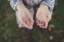 Little girl hands holding daisy flowers — Stock Photo