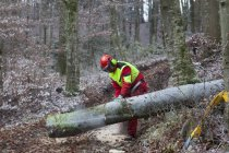 Logger розпилювання дерева в лісі — стокове фото