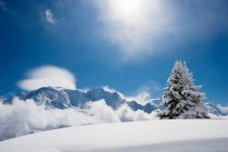 Albero di abete coperto in neve fresca — Foto stock