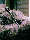 Spade in pile of harvested lavender — Stock Photo