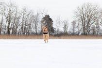 Собака в Снежное поле. — стоковое фото
