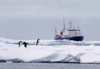 Пінгвіни Аделі, що на крижини, корабель у відстані в Південний океан, 180 км на північ від Східна Антарктида, Антарктида — стокове фото
