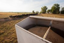 Container of grain on cattle farm — Stock Photo