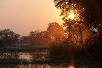 Soleil bas illumine le delta de l'Okavango — Photo de stock