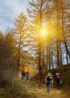 Mochileros senderismo cuesta arriba en el bosque - foto de stock