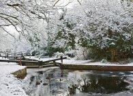 Canards nager dans le lac enneigé à l'heure d'hiver — Photo de stock