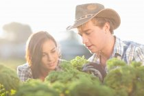 Female and male workers looking at vegetables growing on farm — Stock Photo