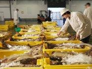 Працівник сортування риб ринку — стокове фото