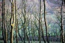 Голые деревья в лесу — стоковое фото