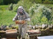 Imker inspizieren Honigwaben — Stockfoto