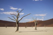 Clay pan with dead trees and sand dunes, Deaddvlei, Sossusvlei National Park, Namibia — Stock Photo