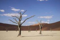 Vaschetta di argilla con morti alberi e dune di sabbia, Deaddvlei, Parco nazionale di Sossusvlei, Namibia — Foto stock