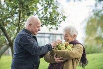 Портрет щасливі старший пари з яблуками — стокове фото