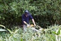 Рабочие рубки деревьев в поле — стоковое фото
