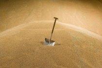 Shovel in wheat store in farm — Stock Photo