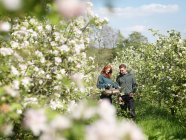 Couple With Apple Blossom In Orchard — Stock Photo