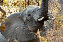 Wilder Elefant im Wald — Stockfoto